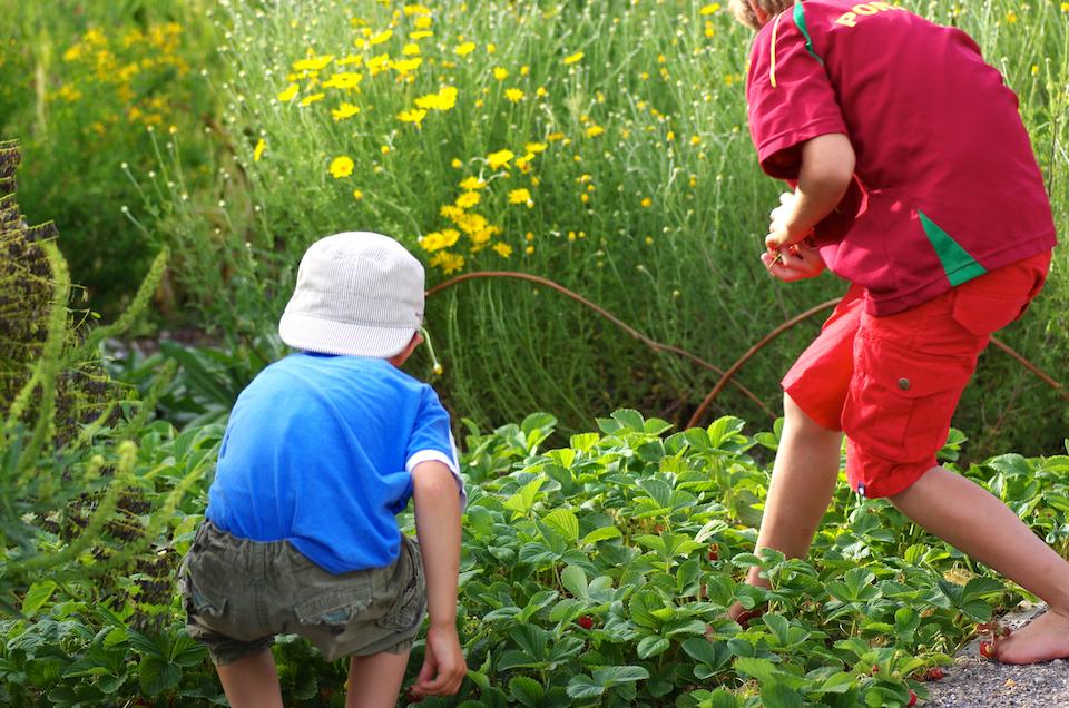 Kinder_beim_Erdbeerernten_IMGP1701_web