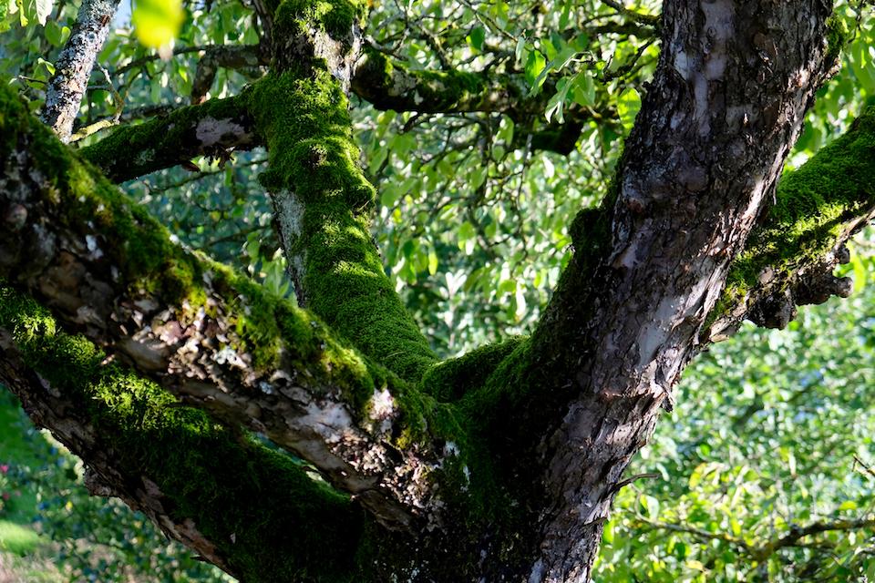 Winkler_Richard_Naturgarten_Tischhauser_Elgg_DSCF8222